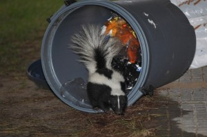 skunk-690x459
