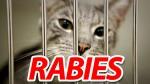 Cat-Rabies