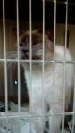 Rabid-cat-4-11-14 Va