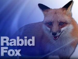 Rabid-Fox---26690055