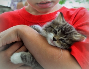 Looking-for-Kittens-001