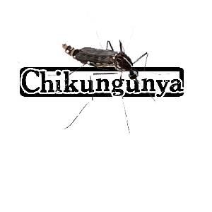 chikV
