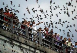 austin-congress-bridge-bats_7335_large_slideshow