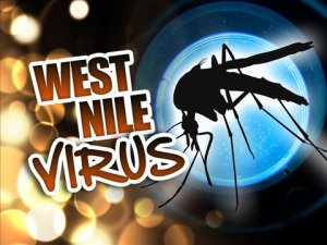 West+Nile+Virus55447