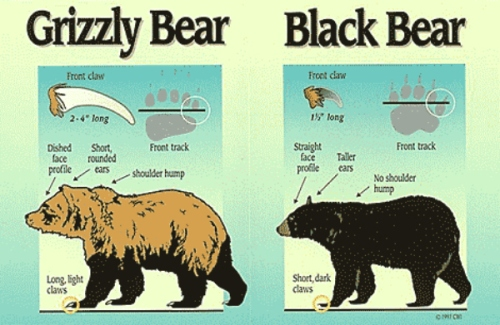 Courtesy Alaska Fish & Game Dept.