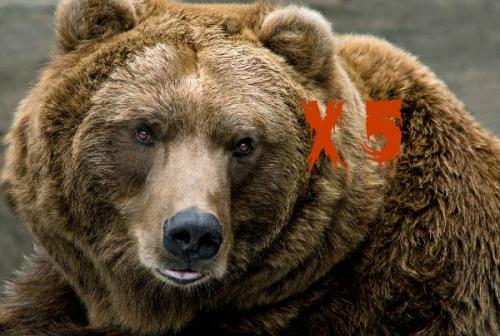 Brown_Bear_-_Ursus_Arctos_600
