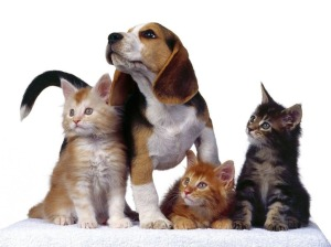 Cat-And-Dog-Wallpaper-91