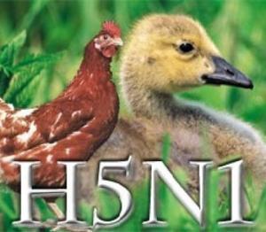 H5N1_46225