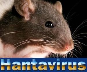 Hantavirus-Outbreak