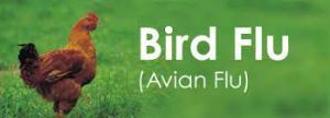 avian.flu647