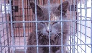 rabidcat.princewilliamhealthdistrict