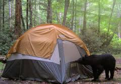 bear.in.tent.334