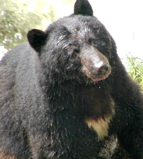 Photo courtesy US National Park Service.