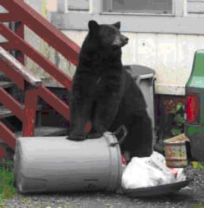 bear1jf99