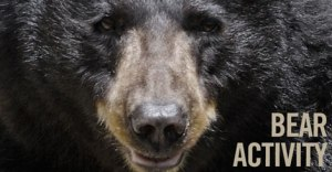 bear_activity_470x245