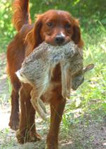 dog-hunting-01-medium