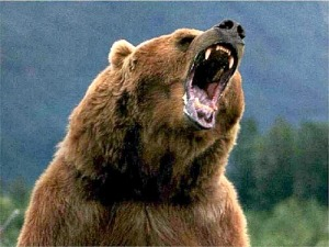 grizzly5