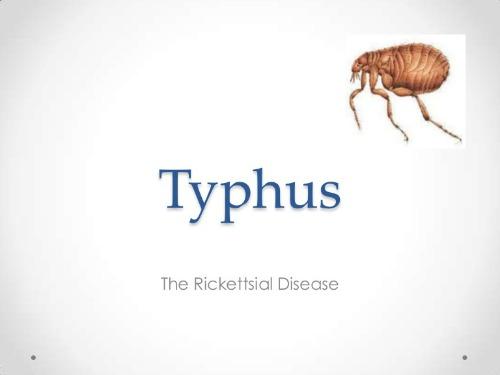 typhus-120922085821-phpapp02-thumbnail-4