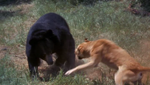 Bear.dog.fight