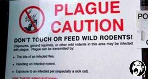 plague-warning