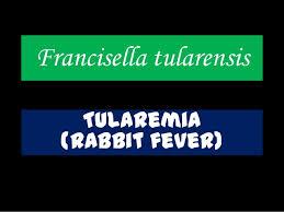tularemia.332oe998