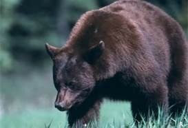 BlackBearNPS