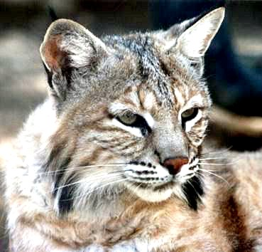 1-5-99t9ty9.bobcat1