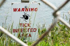 Tick-Infested-Area-500