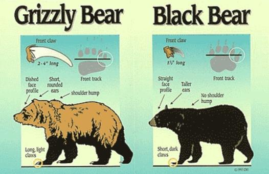a.black_vs_brown-ID_AlaskaFishGame.gov